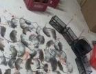 洛阳益民杀虫、专业灭蟑螂、鼠类、蚊蝇、白蚁、蚂蚁
