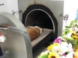 杭州專業處理寵物貓狗死亡事后上門安樂服