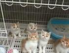 世界名猫专卖.好货不便宜便宜没好货.可货比三家