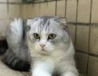 自家生的小猫找新家