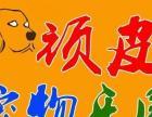 顽皮宠物乐园 专业宠物用品 美容 寄养 销售 防疫
