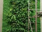 昆明植物墙绿植墙花墙订制酒店会所