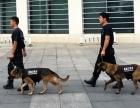 海南优质犬只训练基地