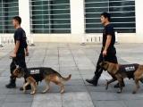 海南海口寵物訓練學校