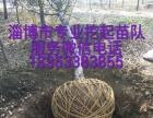 淄博专业挖树起苗作业队