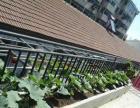 绿色农家 舒适干净农家院式住宿 距离景点近 市区内