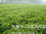 供应马家沟芹菜**礼盒--直供北京淄博烟