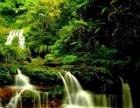世遗赤水大瀑布、四洞沟、佛光岩、桫椤保护区、丙安古镇深度全景7日