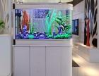 鱼缸专业上门保洁,清洗 鱼缸造景设计
