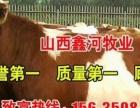 山西较大的肉牛交易中心牛价钱如何