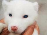 各种爬宠,异宠,狐狸小蜜非迷松鼠