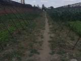 出售优质菜园及大棚 含土地终身使用权