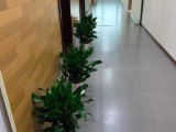 昌平绿植租赁公司