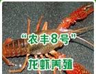 供应龙虾,泥鳅种苗,培训养殖技术,签订合同,包回收