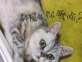 猫咪寄养「柴柴猫咪幼儿园」ฅ^•ﻌ•^ฅ