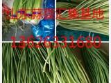 威海蒜薹价格现在多少钱一斤