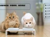 惠州大亚湾区全国宠物接送托运