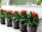 成都高新西区绿植花卉租赁销售,绿植墙,私家花园搭建