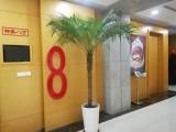 苏州盆栽绿植花卉租赁销售 室内绿化 会场布置