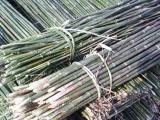 玉田植树杆防腐木