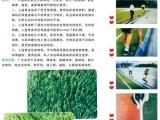 厂家直销 幼儿园人工草坪 足球场人工草坪地铺