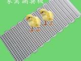 升级版pp材质鸡鸭鹅用漏粪板家禽用塑料漏粪板