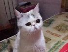 家庭式宠物寄养---专做猫猫寄养