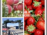 廊坊周边大型草莓采摘园 有机草莓绿色草莓 可市场批发