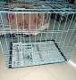 两个全新狗笼子 只需280