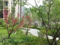 个人出租武阳花园二楼 300到550全套可以做饭