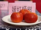 雅安媛紅椪柑苗,媛紅椪柑苗里便宜,雅安種柑桔苗