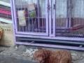 急售宠物用具及笼子