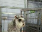 牧和邻宠物连锁(松原店) ——专业宠物美容服务