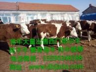 东北肉牛养殖基地任意挑选不满意可调换
