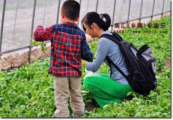 上海近郊农家乐旅游 采摘草莓 钓鱼烧烤住宿 吃土菜