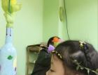 2017年儿童绘画教育培训创业好项目简恩国际艺术中心