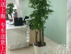 植物花卉租赁,园林绿化养护,庆典花篮