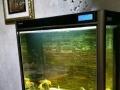 九成新品牌鱼缸出售