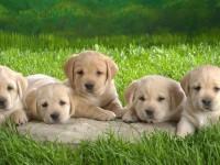 洛阳金毛犬宠物店