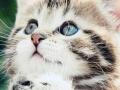 超爱猫人士求领养一只猫仔