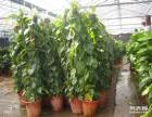 苏州花卉租赁,绿植租赁,植物租摆,室内办公区绿化