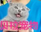【贝拉宠物】最低暹罗猫加菲猫美短金吉拉猫豹猫