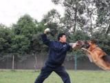 成都训犬学校-专业狗狗训练机构-勇军宠物培训