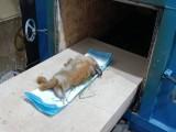沌口开发区宠物丧葬 动物火葬场 宠物安葬 小狗死亡 猫火化