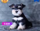 哪里有卖雪纳瑞犬雪纳瑞犬多少钱 支持全国发货