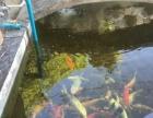 广东汕尾风水鱼池设计建造 过滤系统 鱼池过滤器 大型过滤器