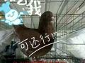 沧州崔尔庄肉鸽养殖厂