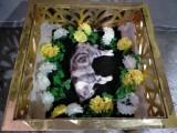 杭州貓狗寵物尸體無害化火化服務,24小時上門接送