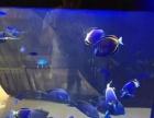 水族箱热带鱼缸尺寸设备水母缸租赁海狮表演展览