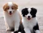 天津哪里有狗狗卖天津狗狗多少钱天津哪里有狗狗领养